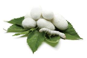 silk protein